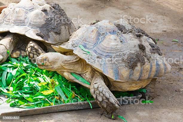 Turtle picture id536664832?b=1&k=6&m=536664832&s=612x612&h=kkacfxmhgb5u 58m0 z rclkranftfca0yyxrstnnhq=