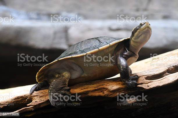 Turtle Stock Photo - Download Image Now