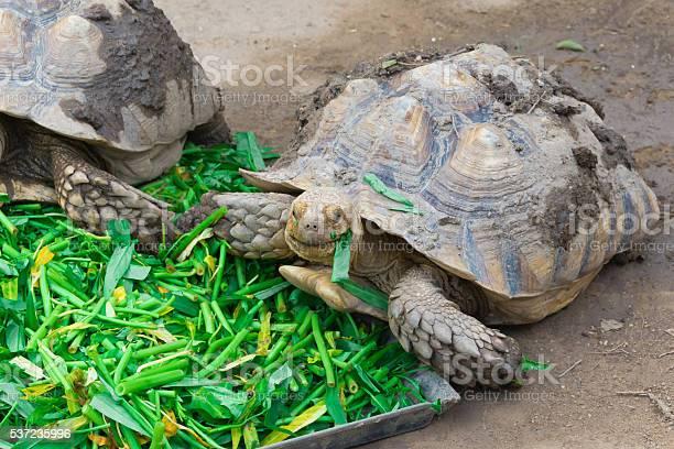 Turtle picture id537235996?b=1&k=6&m=537235996&s=612x612&h=q788brxymrkieum9apqm1n ql5bmgucdxm9p xuu1ny=