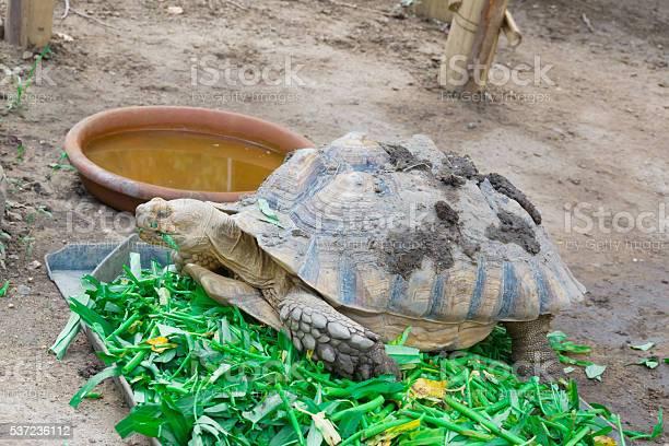 Turtle picture id537236112?b=1&k=6&m=537236112&s=612x612&h=clnkrs onyyvl0xwyjvc ewccy2bs88 7dmv2 k4yqq=