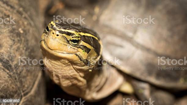 Turtle picture id604381852?b=1&k=6&m=604381852&s=612x612&h=5rzbnk2vcftspb5c4fdrfxvbucp0sb pkj69cj0fzvs=