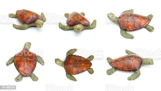 Turtle picture id91488291?b=1&k=6&m=91488291&s=612x612&h=xzygtnpdasr1o579gfst5oi6qrudzcyuvl ndusx9as=