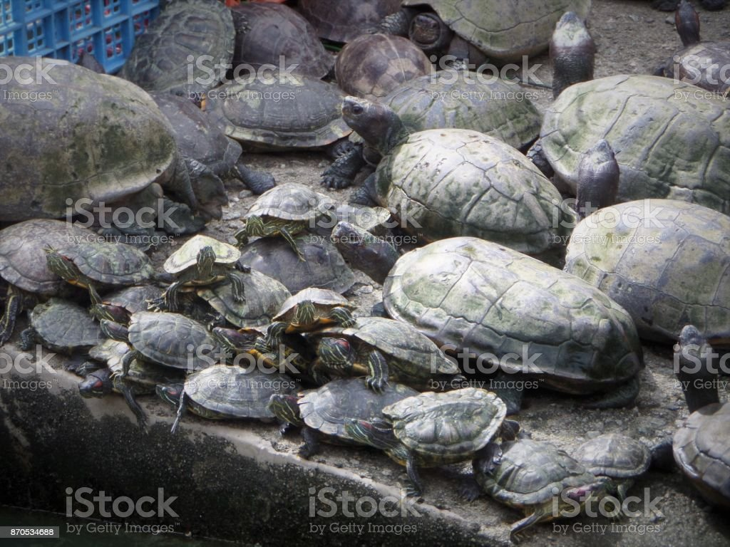 Turtle Pile at Sacred Hindu Monument, Malaysia stock photo