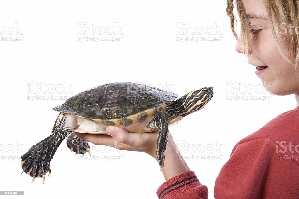 Turtle Portraits royalty-free stock photo
