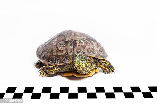 Turtle racing concept