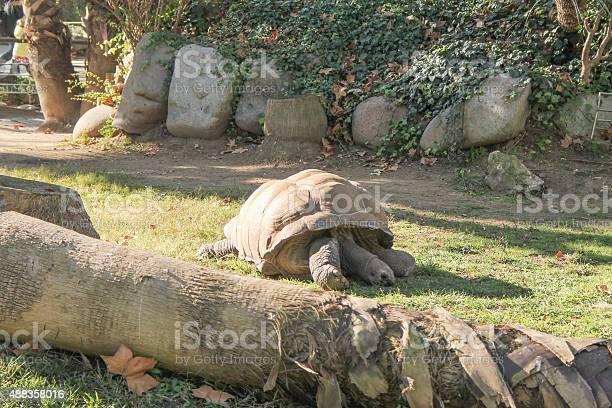 Turtle reptile picture id488358016?b=1&k=6&m=488358016&s=612x612&h=gtas0awbekmu4x9cqcxf afdhzg5ktddcnv0cfbrd84=