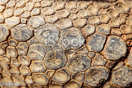 Turtle shell surface pattern