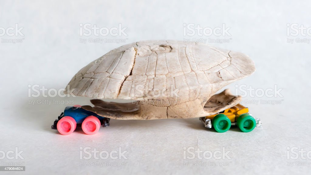 Turtle skate stock photo