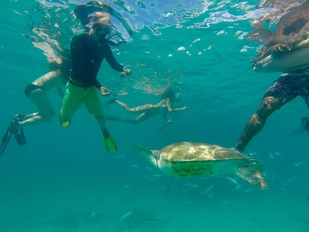Turtle swimming in the sea stock photo
