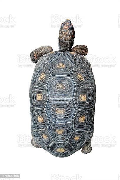 Turtle top view picture id176800456?b=1&k=6&m=176800456&s=612x612&h=ob4eczizdhgokdyoakuxagivhn61f4lm2kvu nmj8oq=