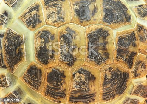 Pattern of a shell of a turtle - top view