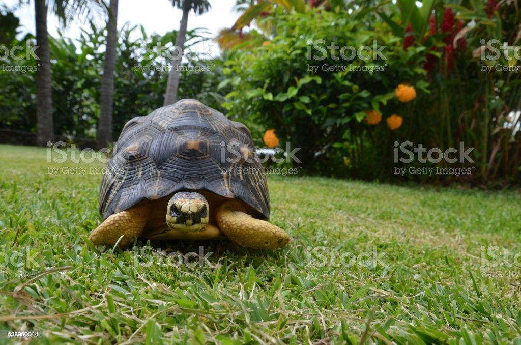 Turtle Tortoise black yellow Tropical stock photo