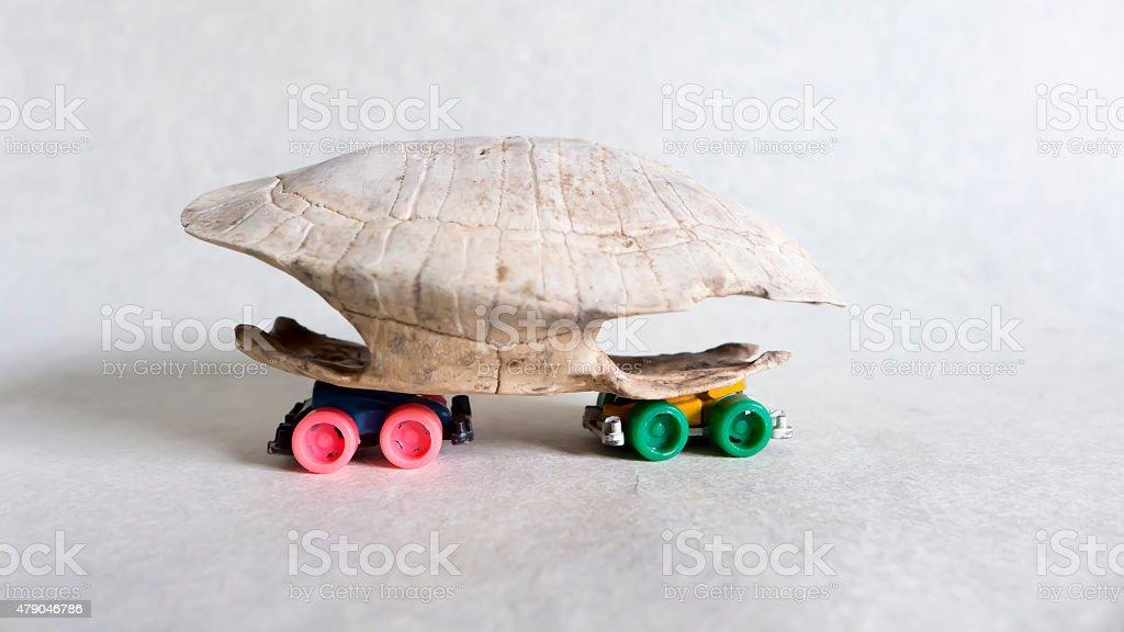Turtle Transpotation stock photo