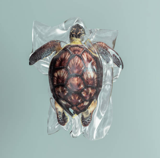 Turtle  trapped in a plastic bag. stock photo