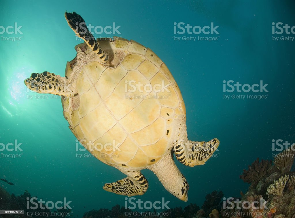 turtle underside stock photo