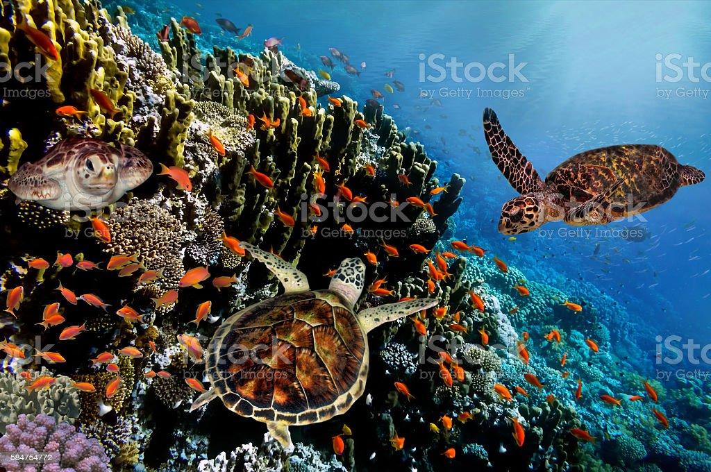 Turtle debaixo d'água - foto de acervo