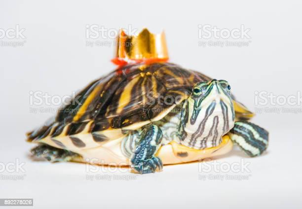 Turtle with a crown fairy tale fantasy picture id892278026?b=1&k=6&m=892278026&s=612x612&h=yg2zrdv9b80jizssbdgfrejy1vnr8slsqbxaexspncw=