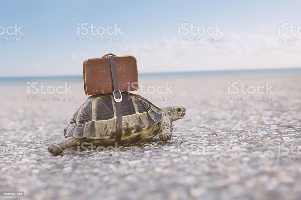 Tortue avec valise. - Photo