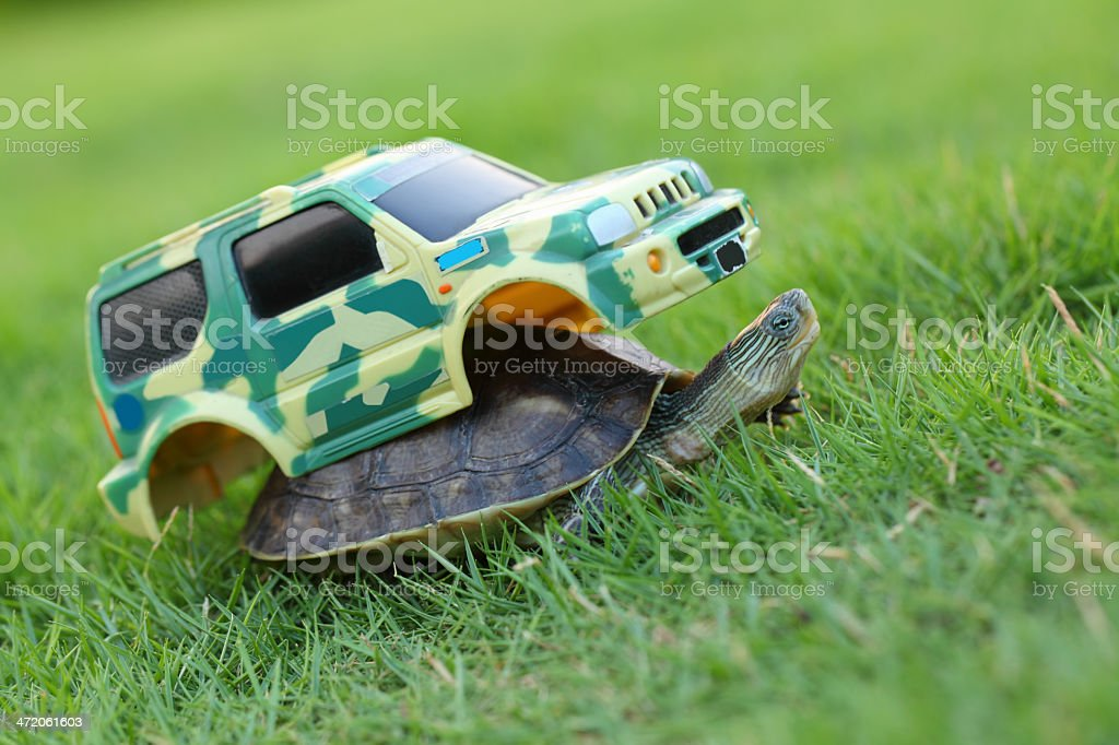 Turtle with SUV Cover stock photo