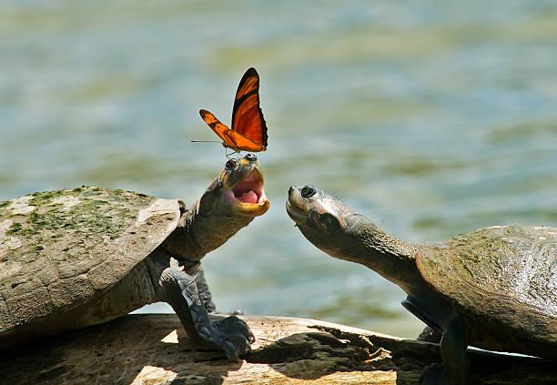 Turtles and butterflies picture id521406199?b=1&k=6&m=521406199&s=612x612&w=0&h=in7dndmkggtrz1w2gag ektyyvkguhtsax4dfveerpo=