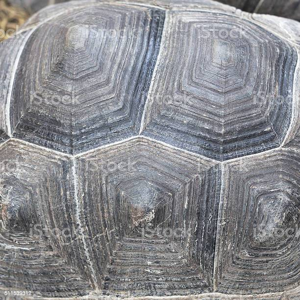 Turtles back background texture picture id511539312?b=1&k=6&m=511539312&s=612x612&h=yqq76z6ju4ntuqaa1baetrat2iwyflzhvbbajjps3fg=