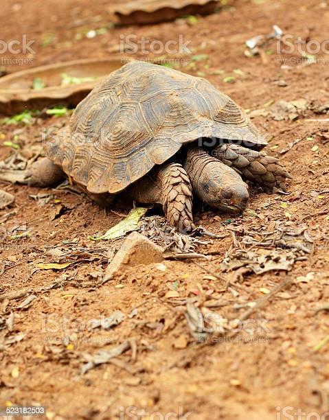 Turtles crawling in the nature picture id523182503?b=1&k=6&m=523182503&s=612x612&h=i46eoex8fi3holhq84hnxgbdkumgylk1frzrkg47atc=