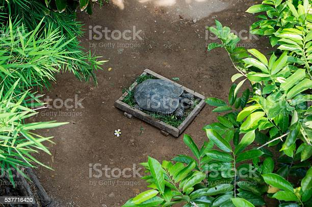Turtles eat vegetables in the pan picture id537716420?b=1&k=6&m=537716420&s=612x612&h= pdgiueahhzurjko1ngbkmrz crcctn8lchuvawotly=