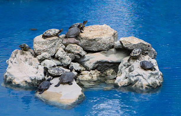 Turtles hanging out stock photo