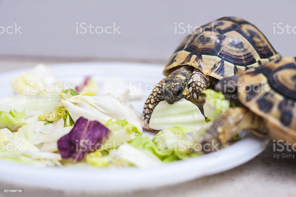turtles have lunch stock photo