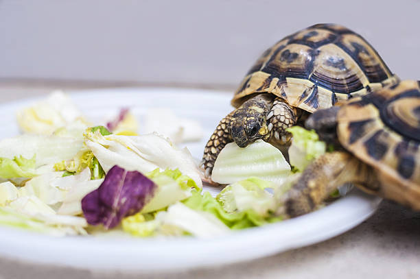 turtles have lunch – Foto