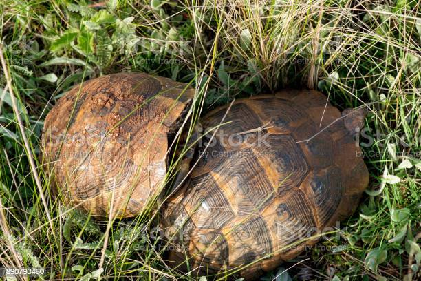 Turtles in a spring garden picture id890793460?b=1&k=6&m=890793460&s=612x612&h=jbsyg0pa mcqsueyhtxcjvbn8mkaigbwkzggjy qvao=