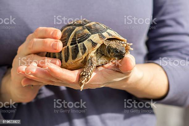 Turtles in the hands of a woman picture id519623922?b=1&k=6&m=519623922&s=612x612&h= 4kq5lcm pp xbmc0d9efqvexmypmb9uot7se5l3ixm=