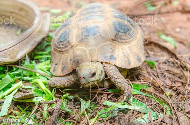 Turtles on the ground picture id611752978?b=1&k=6&m=611752978&s=612x612&h=mlhehrgqw9rxe 5wdyhxq7umy79plh8cvgupruupdvg=