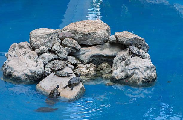 Turtles on Vacation stock photo