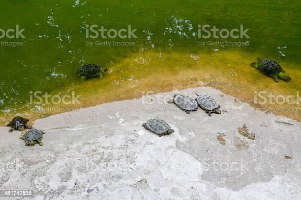 Turtles picture id481742838?b=1&k=6&m=481742838&s=612x612&h=u92guchjcty fpc p5b wonwdq0uiaves4cjpb3gf8w=