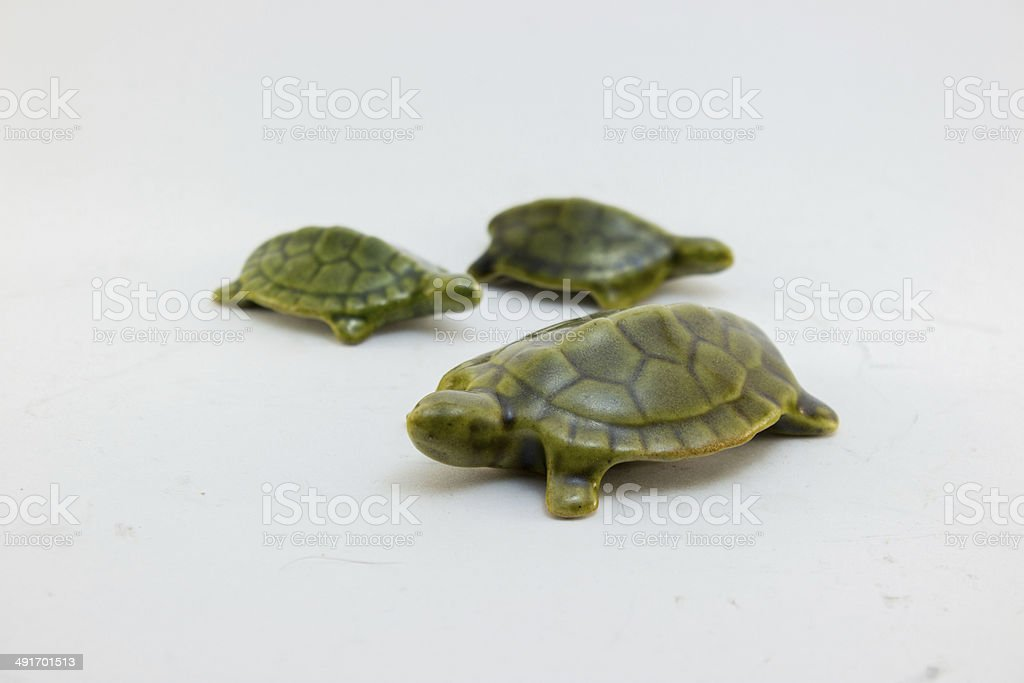 tortugas stock photo