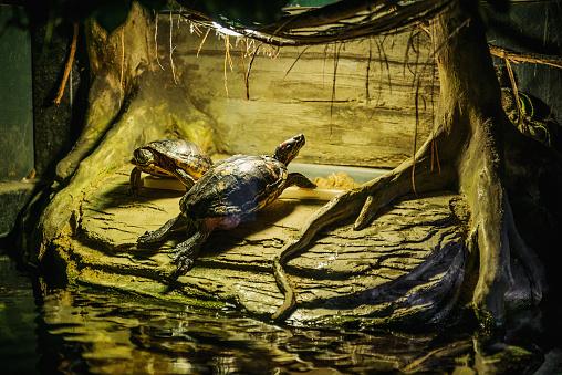Turtles resting near water