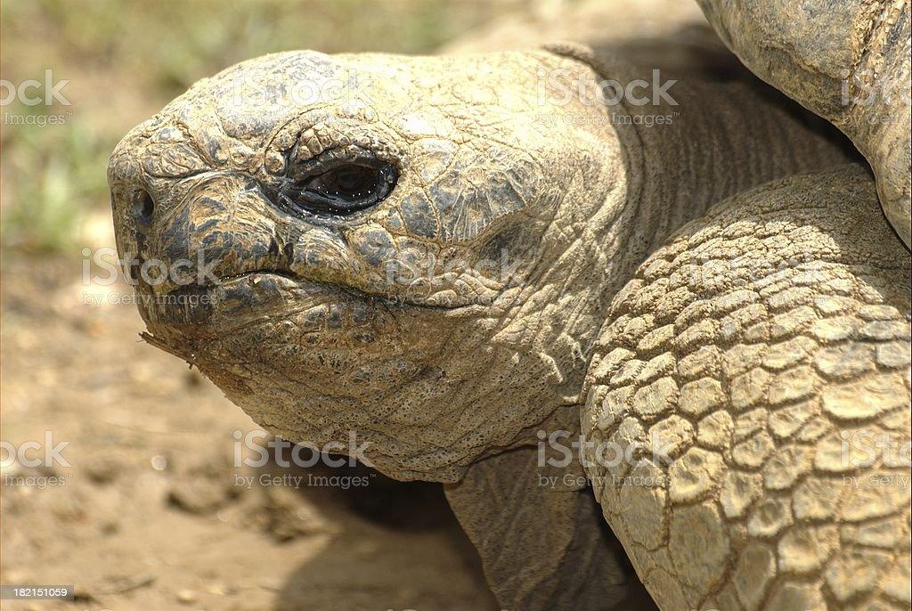 Turtle's Tears stock photo