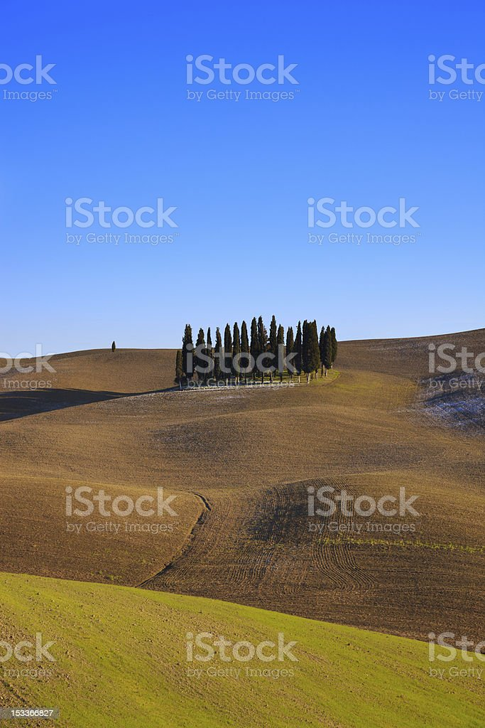 Tuscan cypress trees. Val d'Orcia near Siena. stock photo