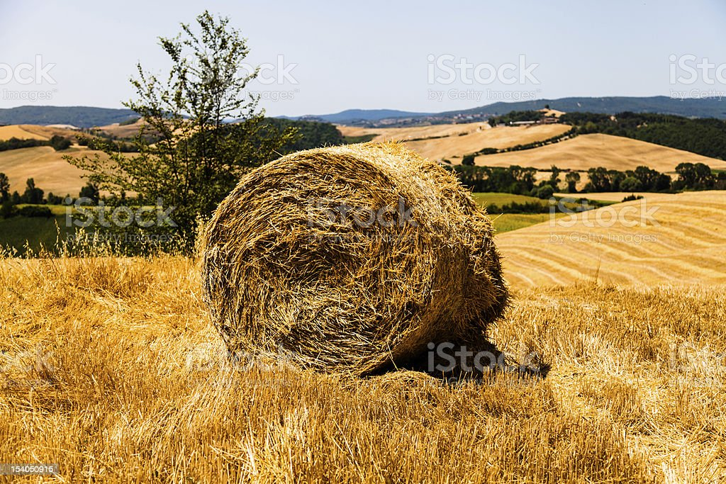 Tuscan Hay Bale close-up in a wheat field royalty-free stock photo