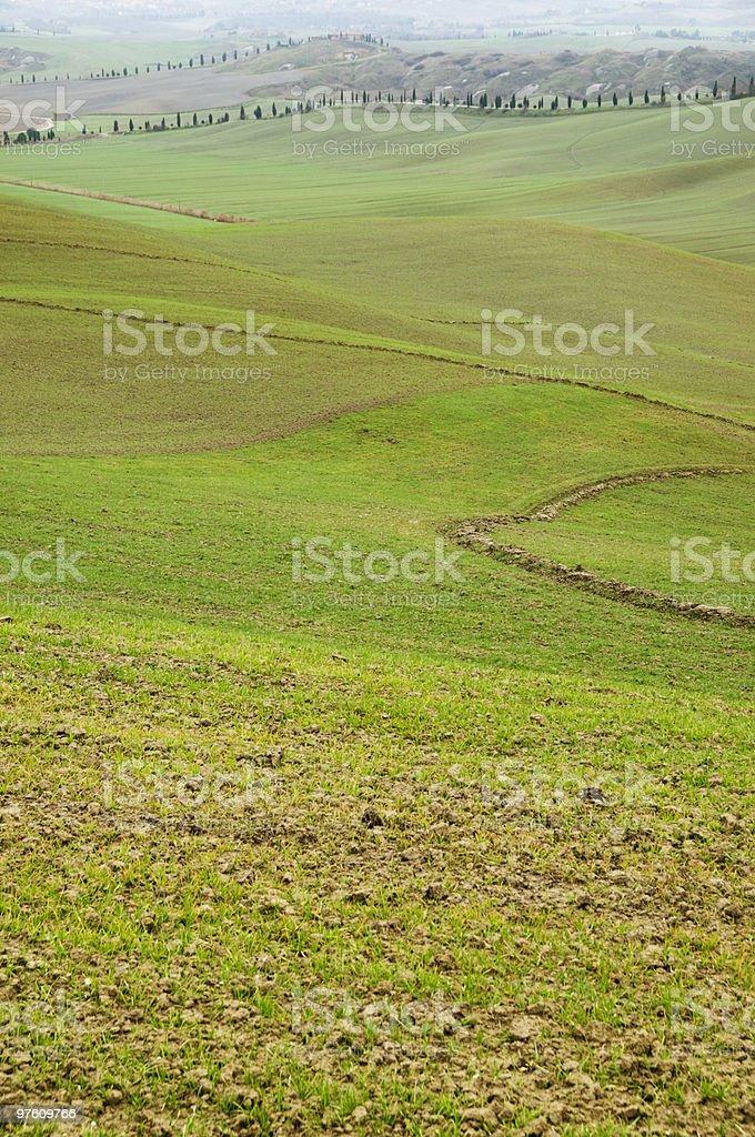 Collines de Toscane avec des rangées de cyprès photo libre de droits
