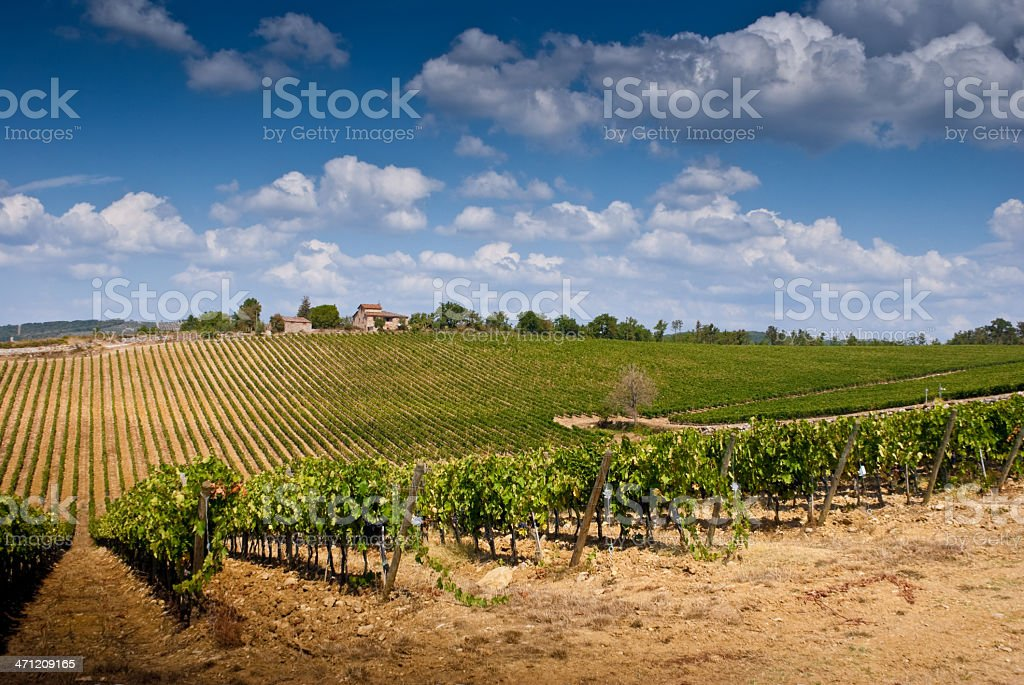 Tuscan Landscape in Chianti Region with Vineyards royalty-free stock photo