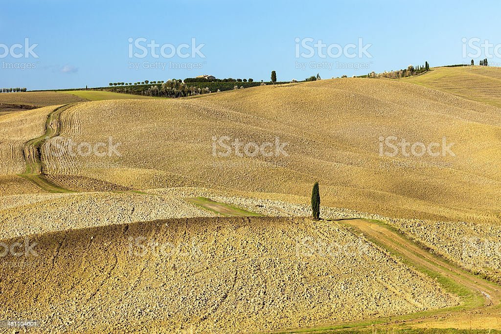 Tuscan Landscape With Country Road And Lonely Cypress Tree royalty-free stock photo