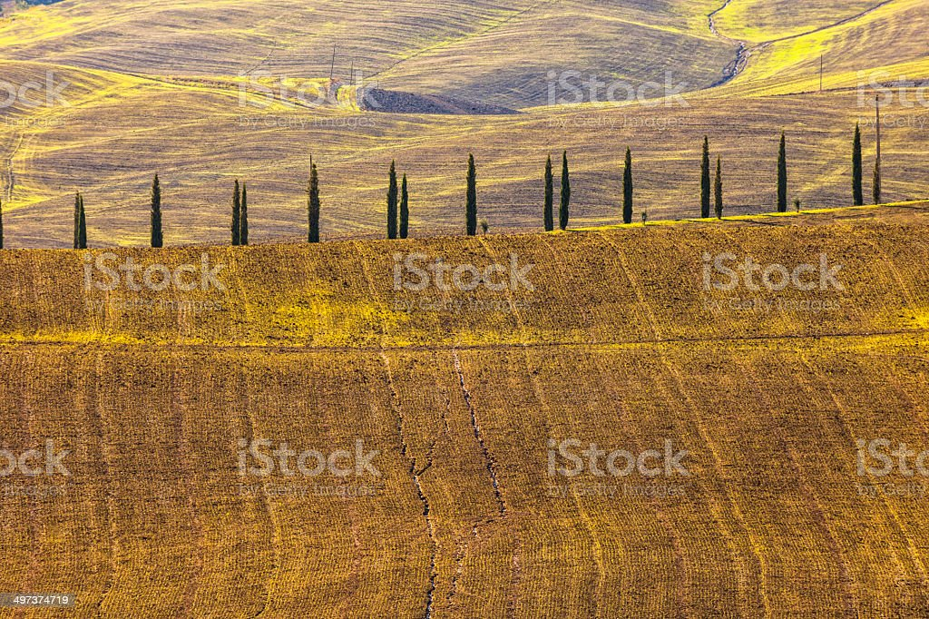 Tuscan Landscape With Cypress Trees royalty-free stock photo