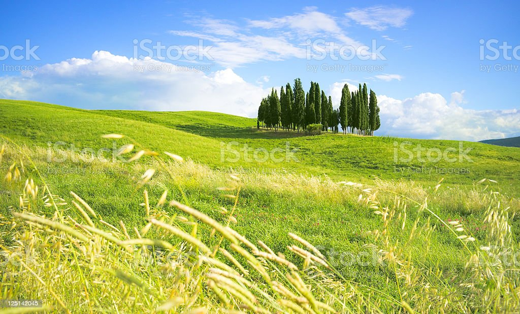 Tuscan landscape with group of cypress trees - Tuscany, Italy royalty-free stock photo