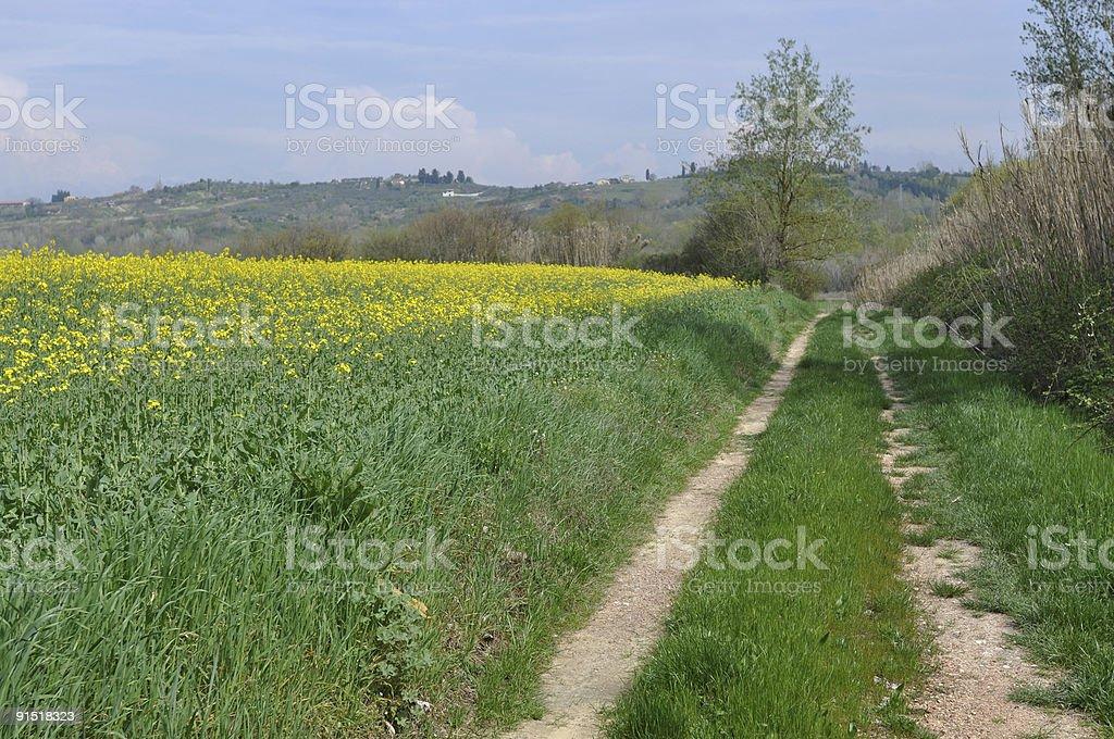 Tuscan Road stock photo