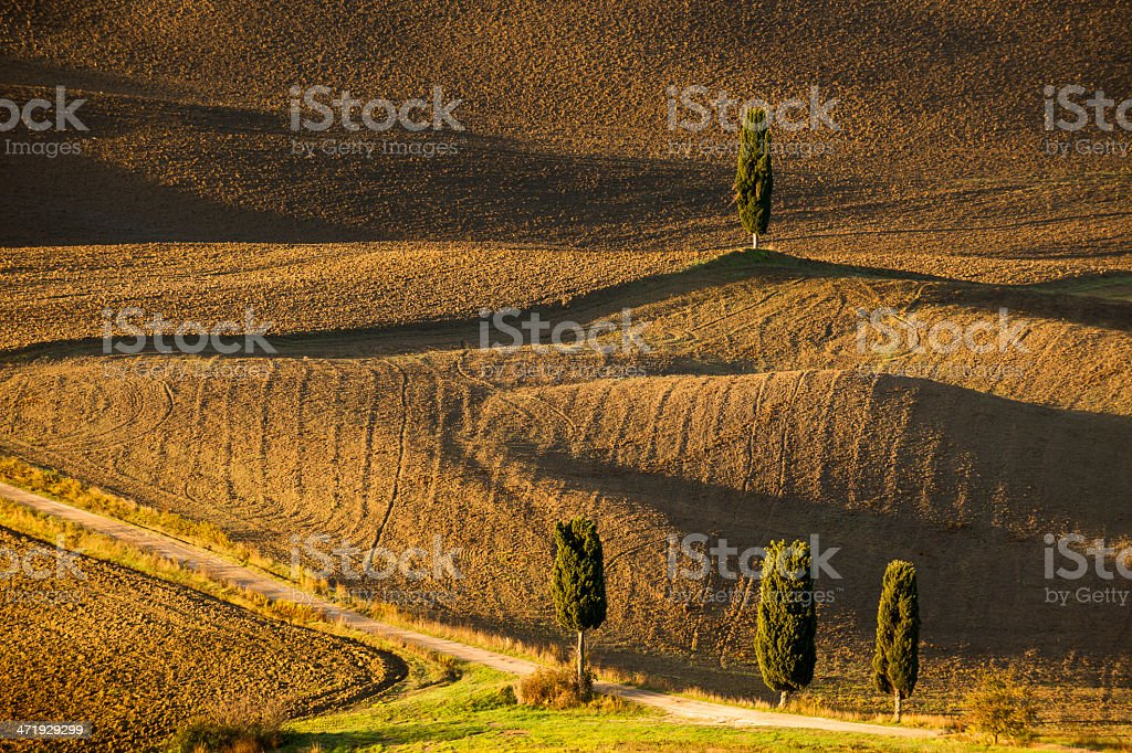 Tuscan Rolling Landscape With Cypress Trees, Lights And Shadows royalty-free stock photo
