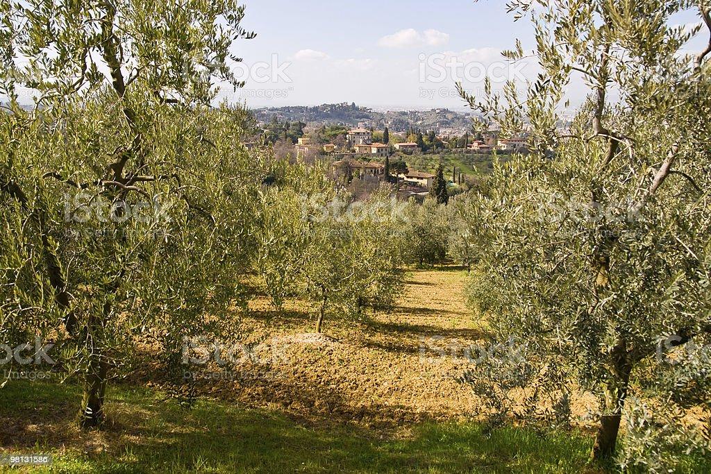 Tuscan showcase royalty-free stock photo