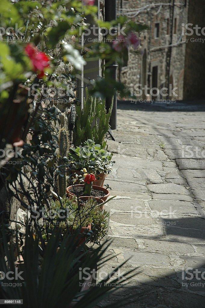 Tuscan Street Flowers royalty-free stock photo