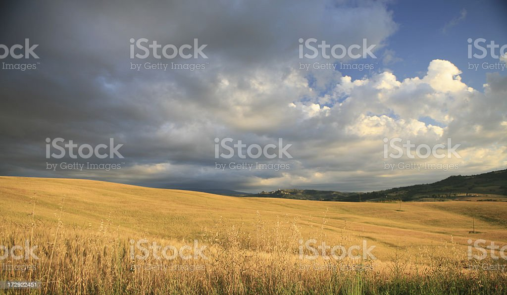 Tuscan wheat field and dramatic sky, Val d'Orcia Tuscany Italy royalty-free stock photo